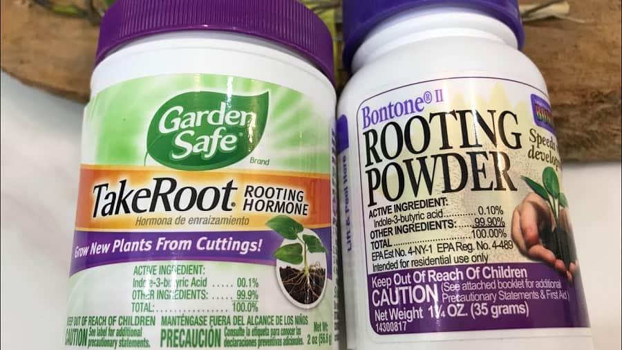 thuốc kích thích ra rễ takeroot