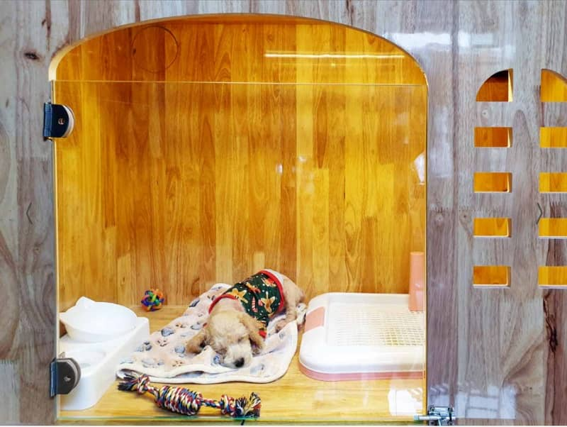 khách sạn thú cưng trông giữ chó mèo Giuchomeo.com